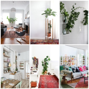 house plant collage